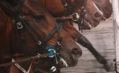 Toto2 Casino betting på hest